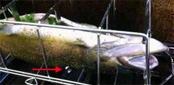 fisch grillen | fisch auf grill