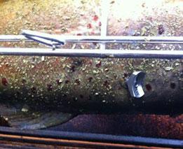 fisch grillen | gegrillter fisch